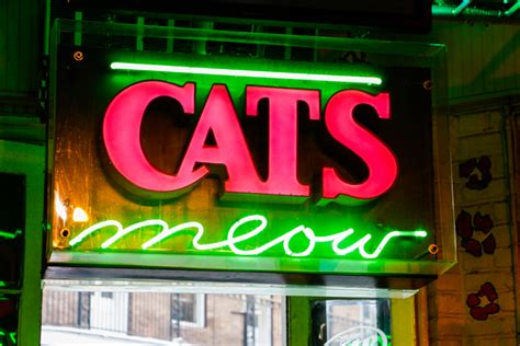 Cat's Meow   New Orleans   Nightlife Venue