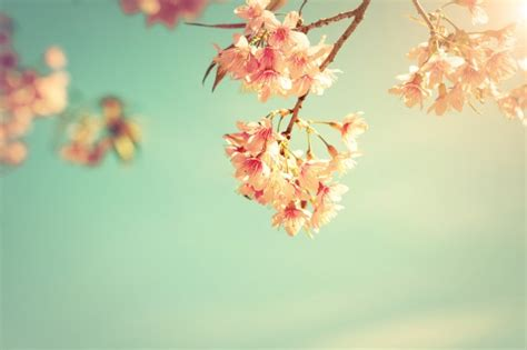 Vintage nature background of beautiful cherry pink flower