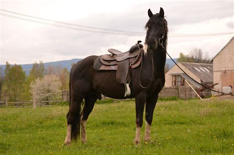 Jester Royal Smart | LUCKY HORSE RANCH