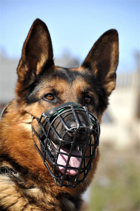 The Dog Trainer : Muzzles: The Why, the How, and the Why